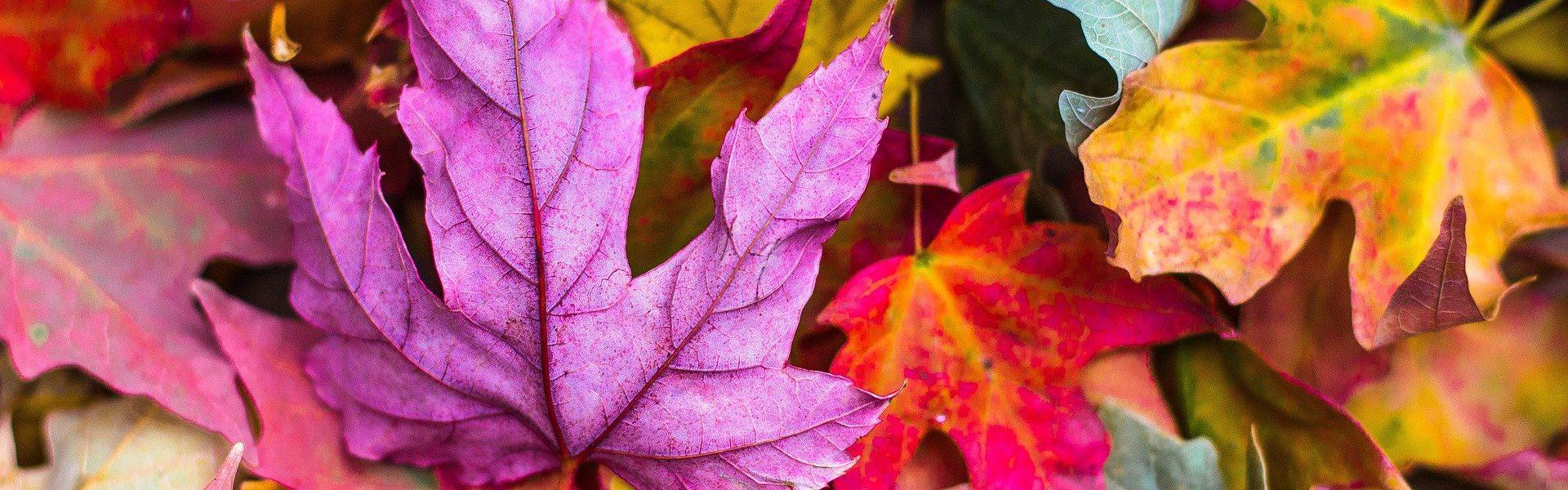 Jak przetrwać jesień